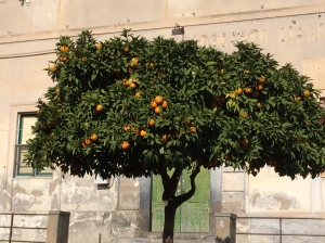 Orange tree in the middle of Adrano