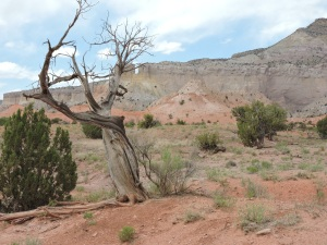 GOK's tree at Ghost Ranch